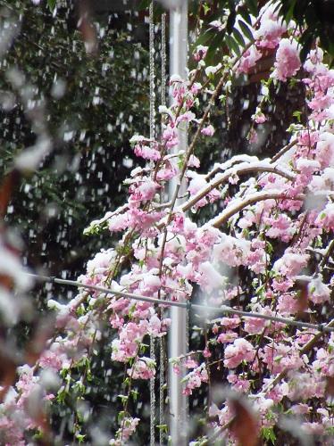 2020年3月29日 雪.jpg